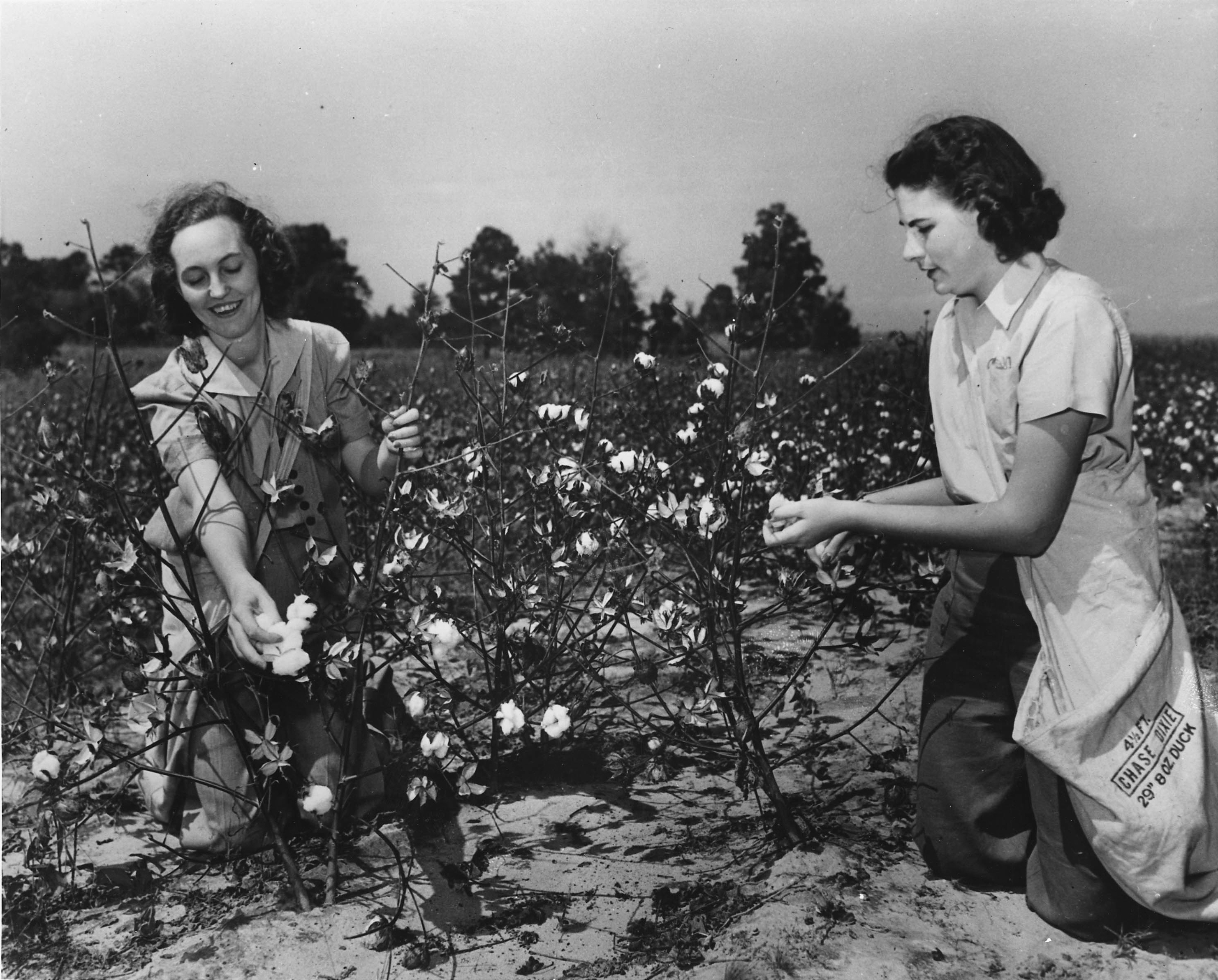 Women Pick Cotton for U.S. Crop Corps