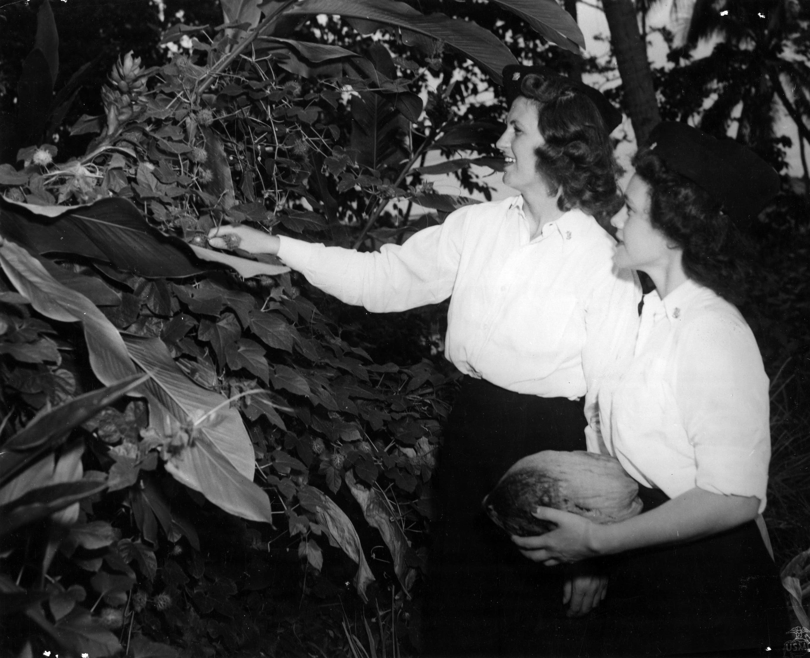 Navy Nurses Investigate Plants in Guadalcanal Jungle