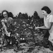 Women Pick Cotton for U.S. Crop Corps