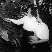 Navy Nurses Investigate Plants in Guadalcanal Jungle
