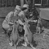 Army WACs Playing with Wallabies
